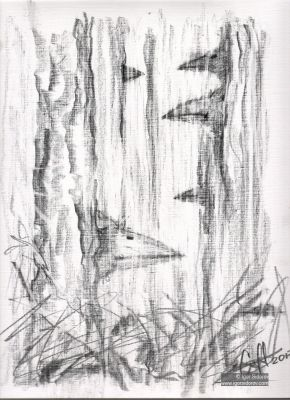 ЛЕСНЫЕ ПТАХИ. Бумага, карандаш. 31х23 см.