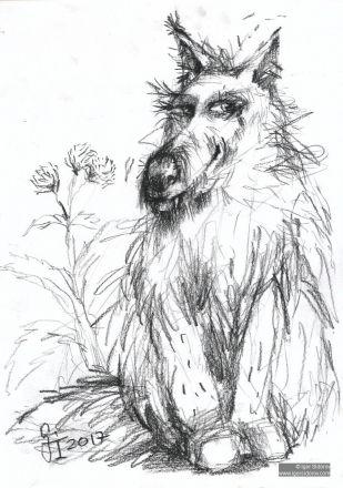ЖИВОТИНА. Рисунок. Бумага, угольный карандаш. 29х21см.